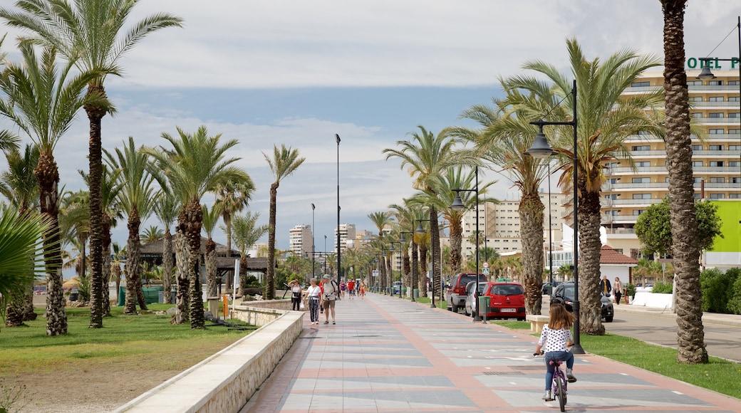 Playa Los Alamos inclusief fietsen, tropische uitzichten en straten