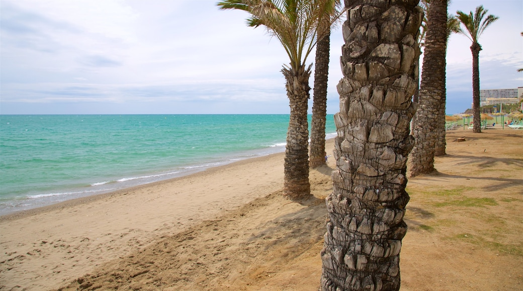 Torremolinos featuring tropical scenes and a beach