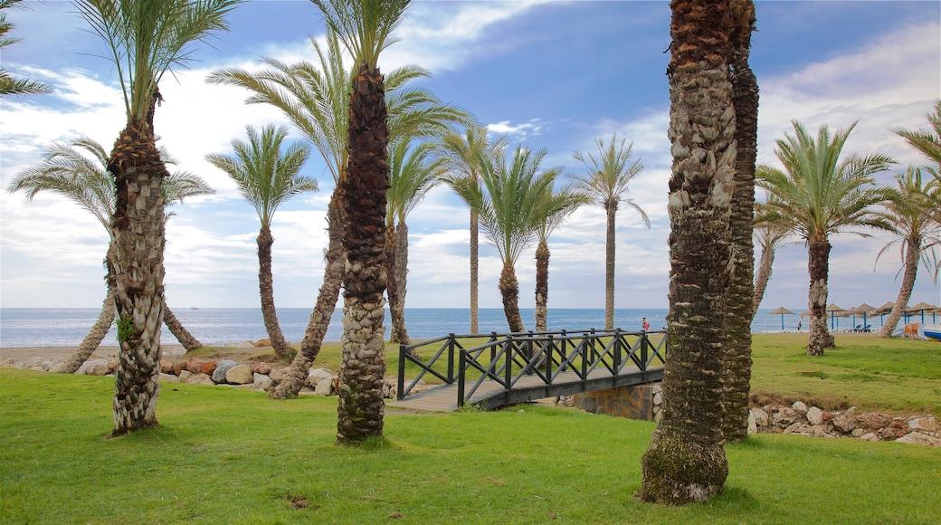 Playa Los Alamos toont algemene kustgezichten en tropische uitzichten