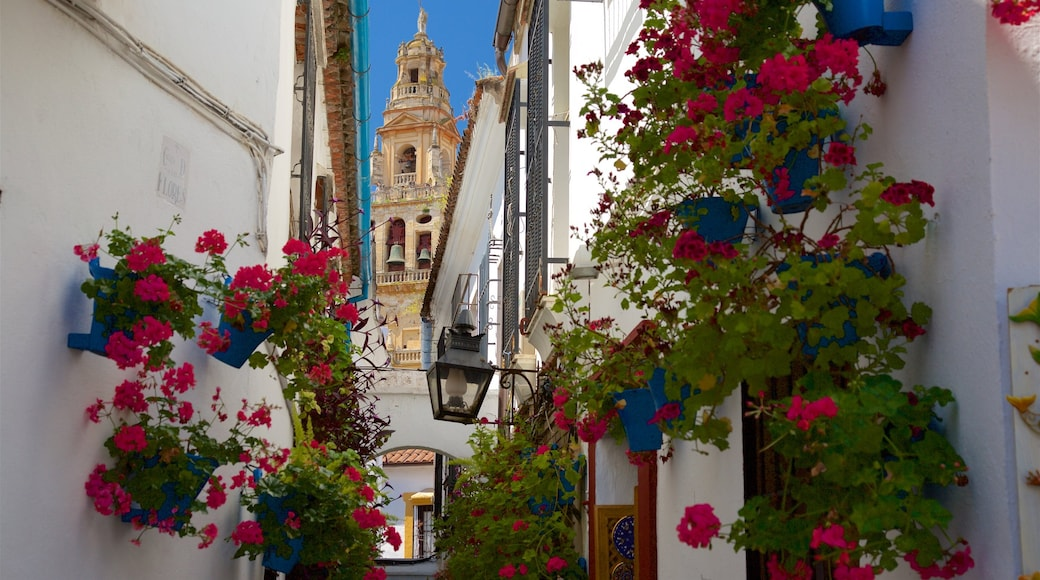 Córdoba mostrando flores salvajes y flores
