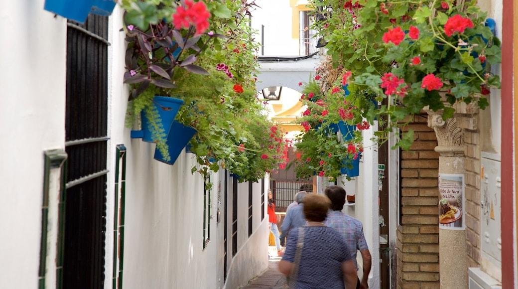 Córdoba que incluye escenas cotidianas y también un grupo pequeño de personas