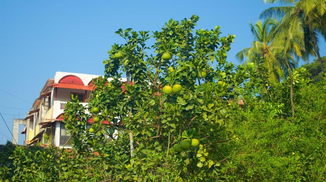 Panaji caracterizando um jardim