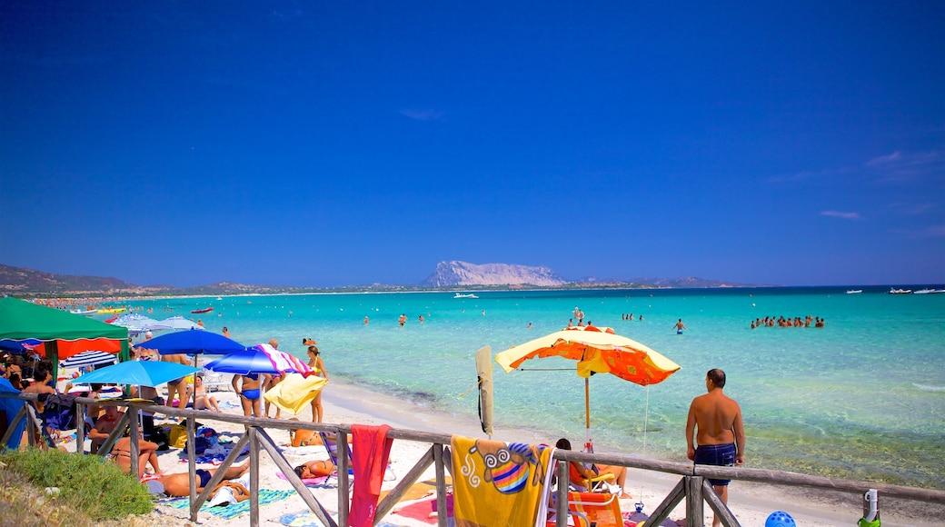 San Teodoro mostrando una playa de arena y vistas de una costa
