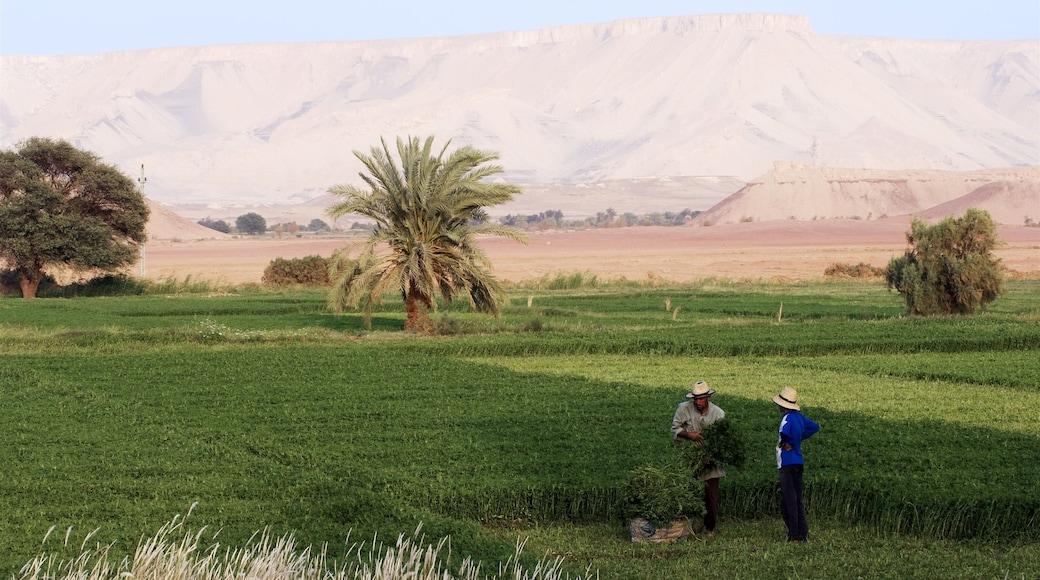 Egito caracterizando fazenda, cenas tranquilas e paisagens do deserto