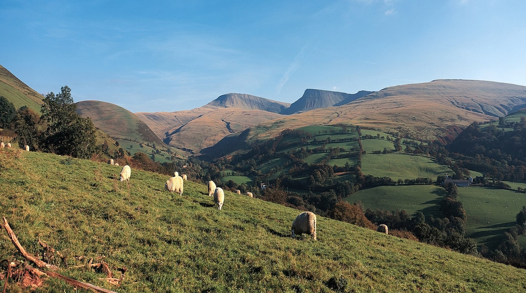 Powys featuring cuddly or friendly animals, farmland and tranquil scenes