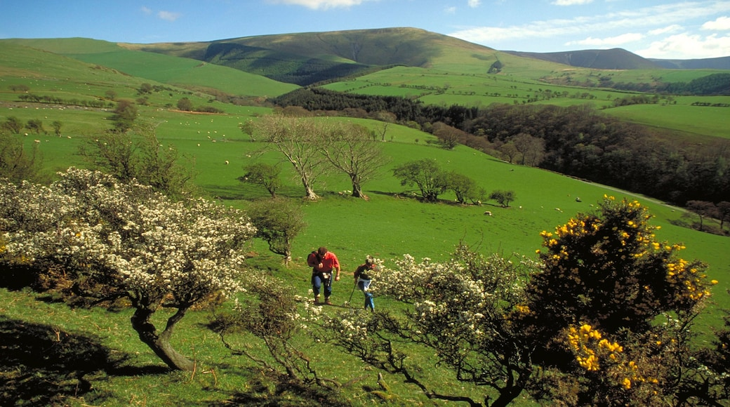 Machynlleth featuring tranquil scenes, wild flowers and hiking or walking