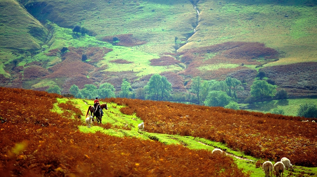 Powys which includes horse riding, farmland and tranquil scenes