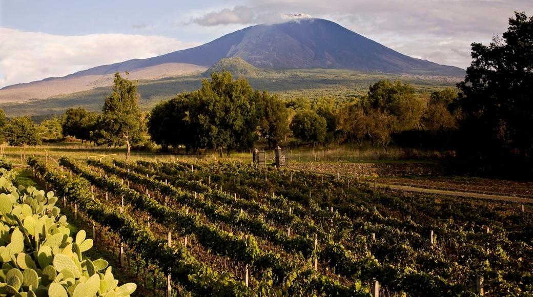 Catane - Etna mettant en vedette montagnes et ferme