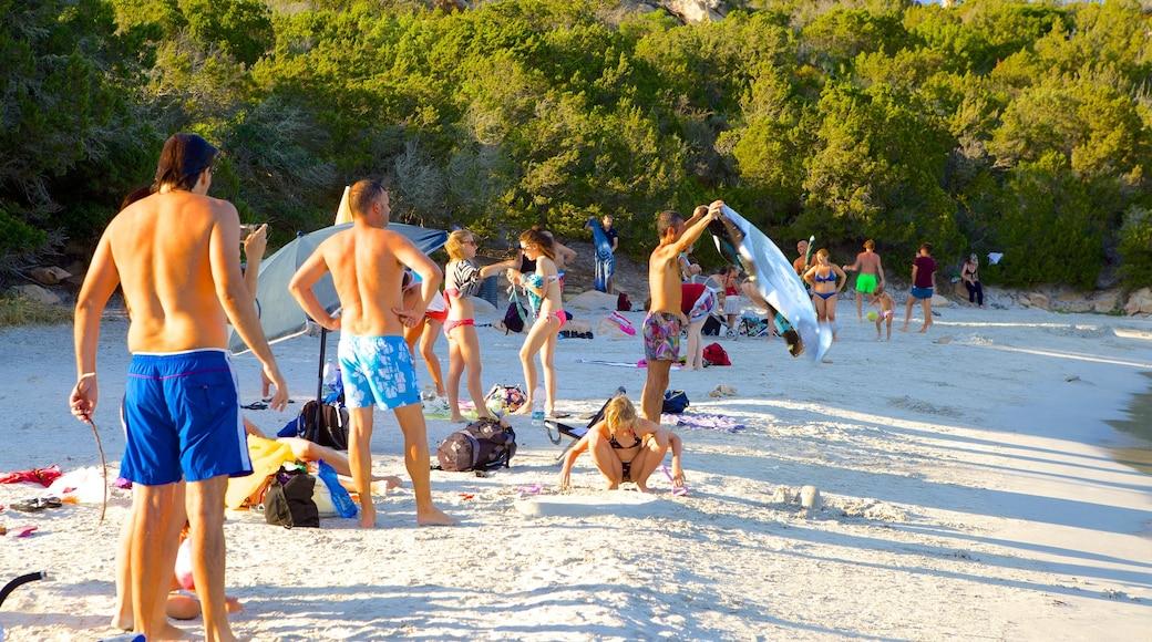 หาด Capriccioli เนื้อเรื่องที่ ชายหาด ตลอดจน คนกลุ่มใหญ่