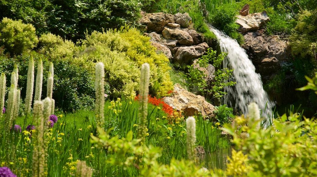Red Butte Garden and Arboreteum featuring wildflowers