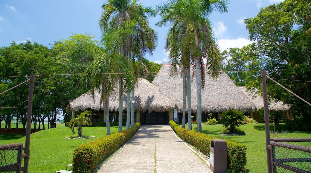 Villahermosa showing tropical scenes and a garden