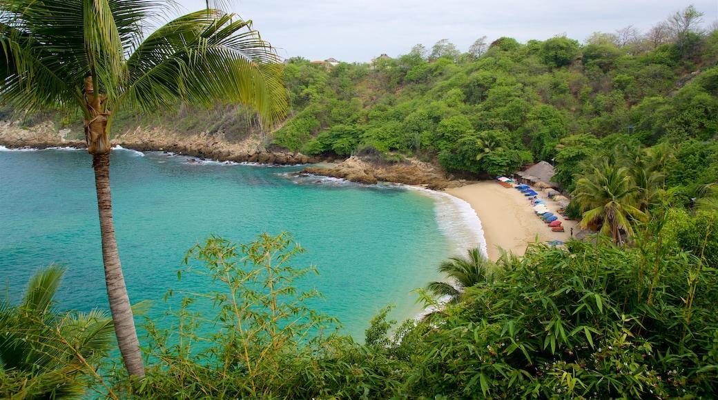 Playa de Carrizalillo ofreciendo vistas generales de la costa y una playa