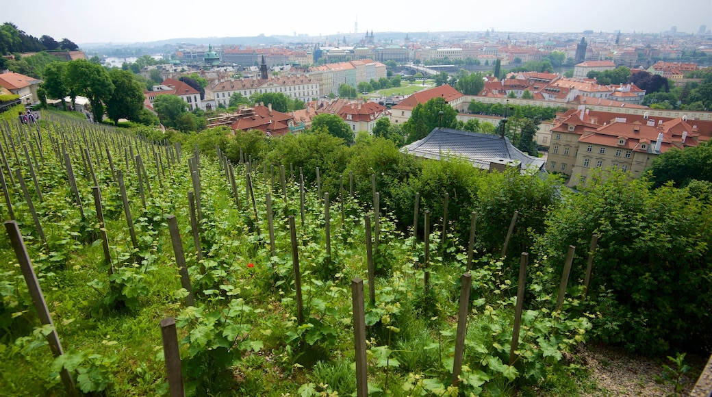 Mala Strana showing a city, landscape views and a garden