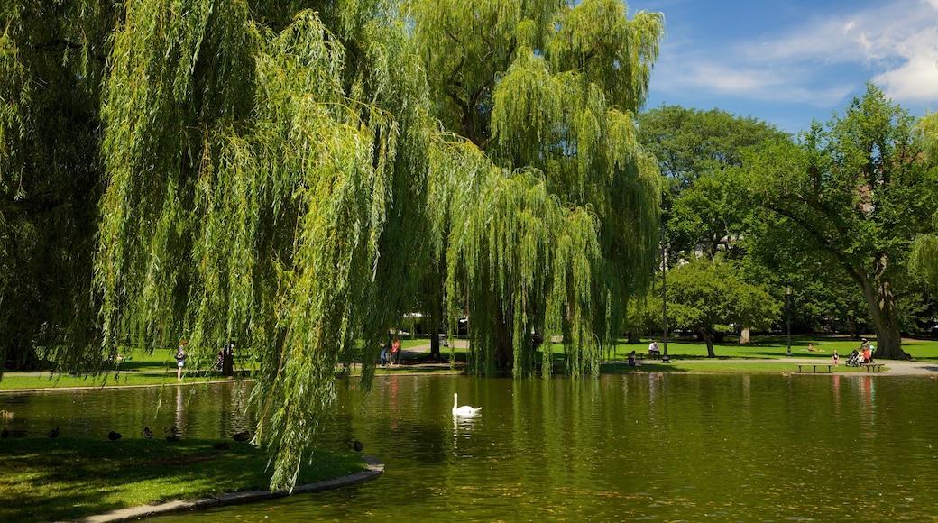 Boston Common das einen See oder Wasserstelle, Park und Landschaften