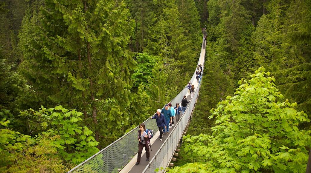 Capilano Suspension Bridge featuring landscape views, a suspension bridge or treetop walkway and hiking or walking