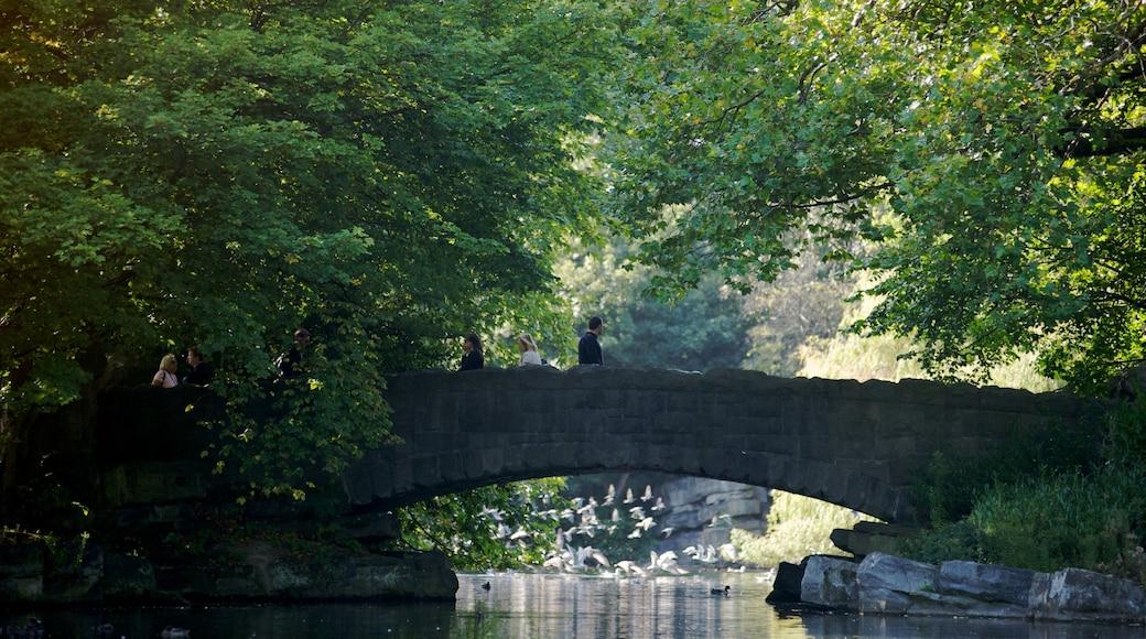 St. Stephen\'s Green featuring landscape views, a bridge and a park