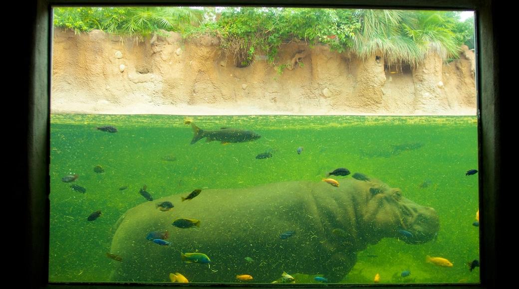San Antonio showing zoo animals, marine life and land animals