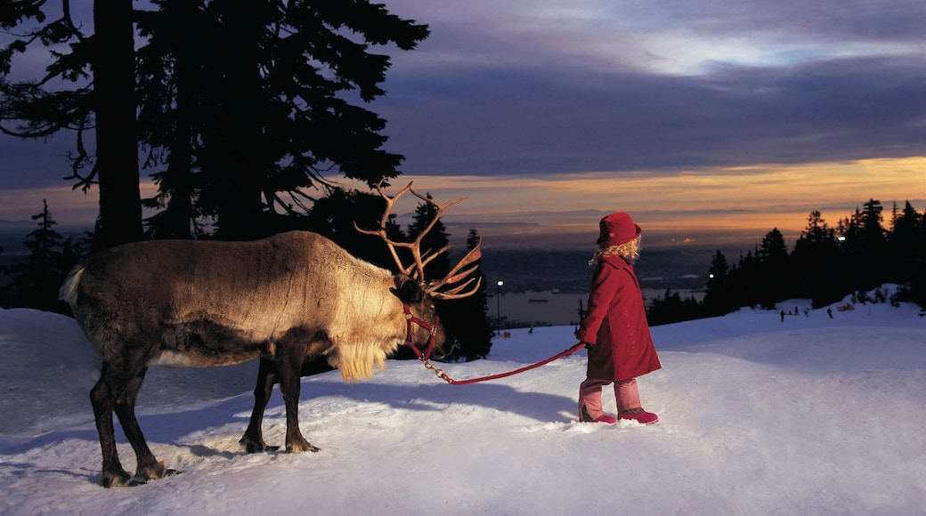Grouse Mountain which includes snow, cuddly or friendly animals and a sunset