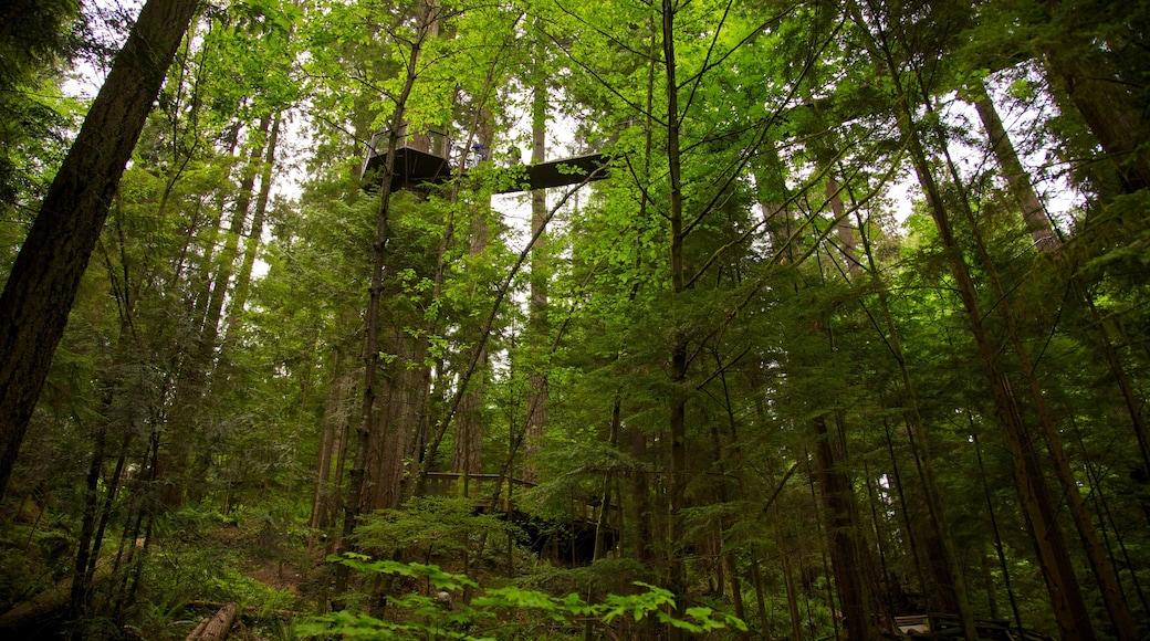Capilano Suspension Bridge showing forest scenes, a suspension bridge or treetop walkway and landscape views