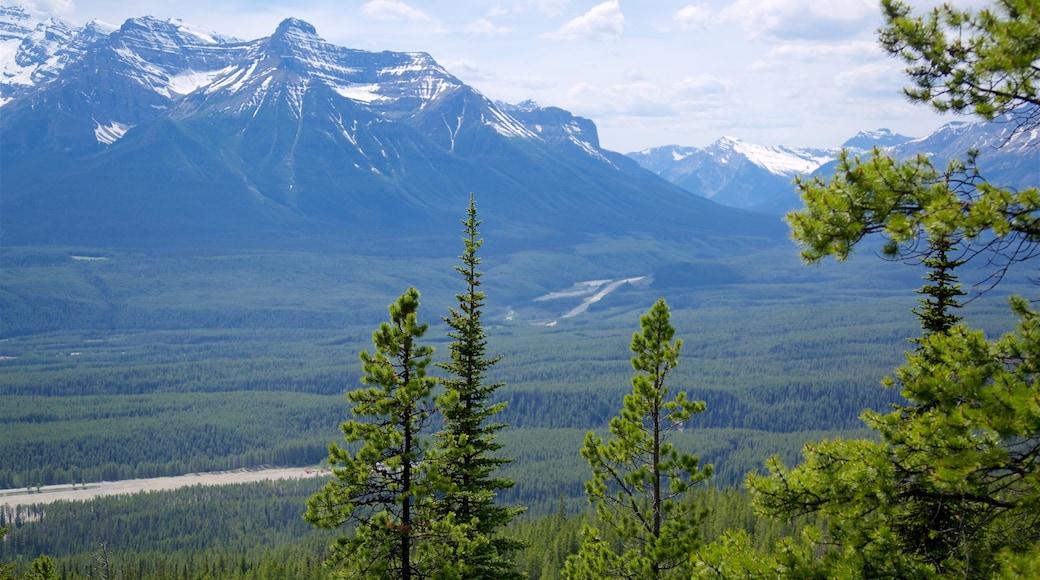 Gondeln von Lake Louise welches beinhaltet Berge und ruhige Szenerie