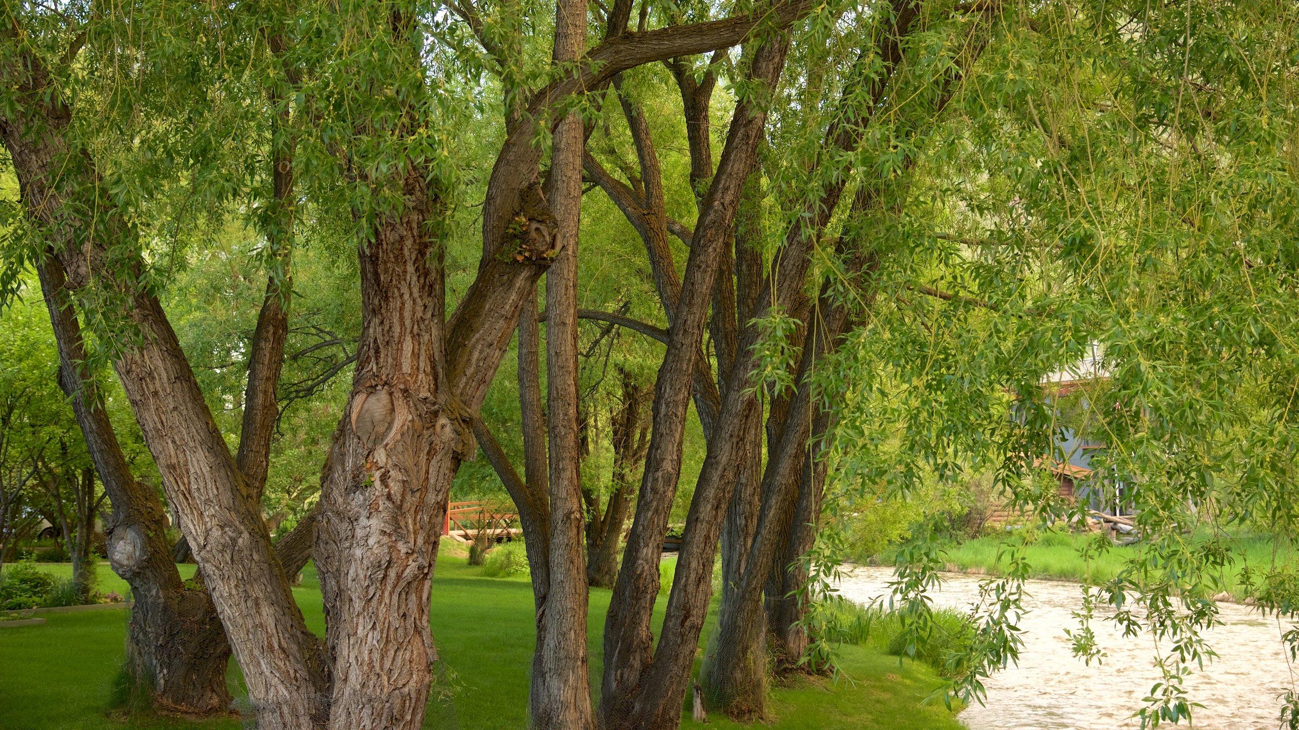 Teton County, Wyoming, United States of America
