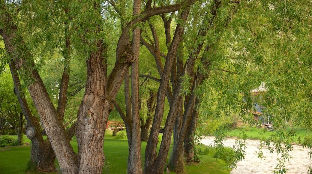 Jackson caracterizando um jardim