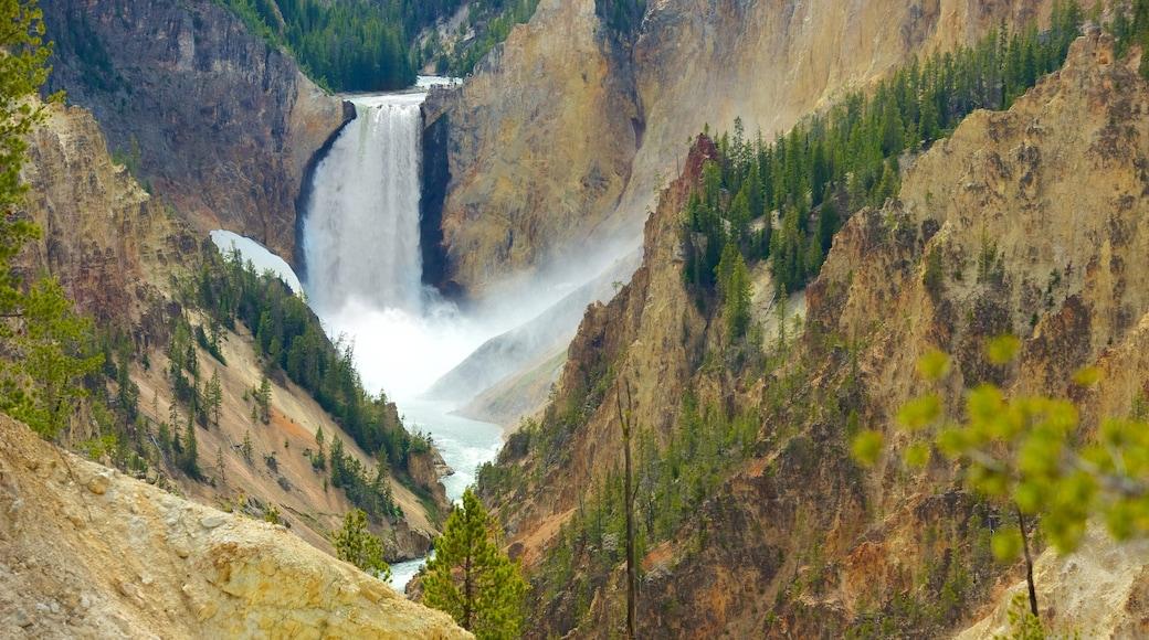 黃石大峽谷 设有 峽谷, 小瀑布 和 急流