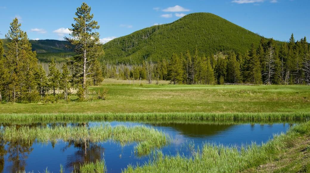 Yellowstone-Nationalpark welches beinhaltet Sumpfgebiet und ruhige Szenerie