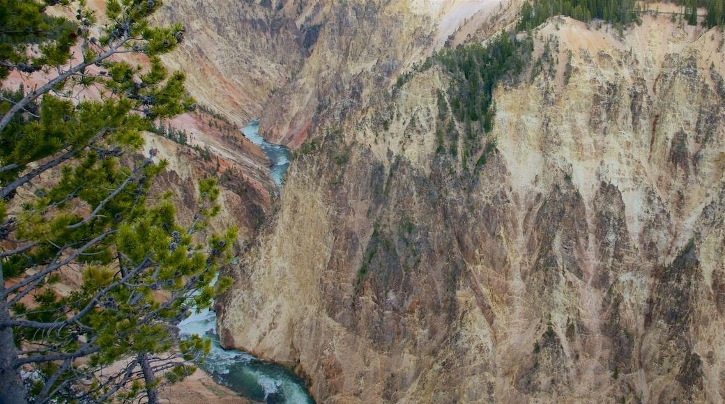 黃石大峽谷 呈现出 峽谷 和 急流