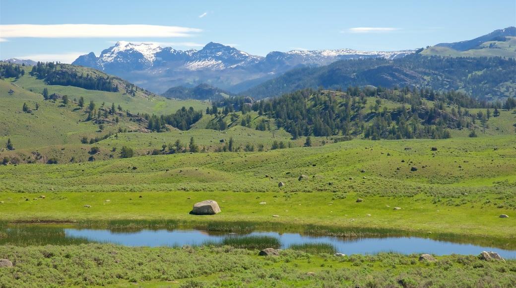懷俄明西北部 其中包括 山水美景, 寧靜風景 和 河流或小溪