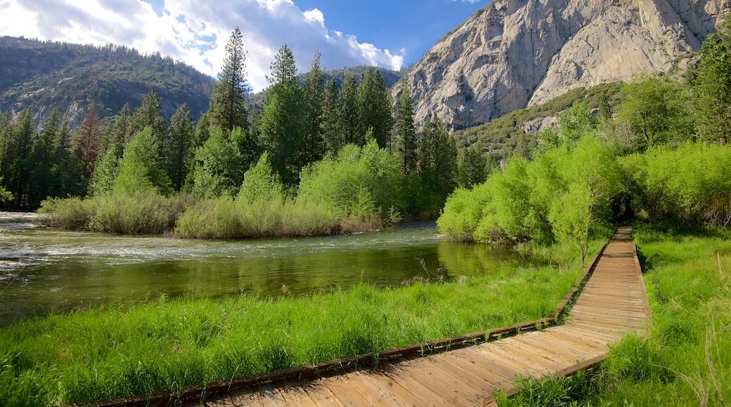Parc national de Kings Canyon montrant rivière ou ruisseau, zone humide et scènes tranquilles