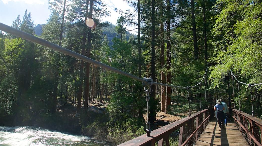 Parc national de Kings Canyon mettant en vedette scènes forestières, rivière ou ruisseau et pont