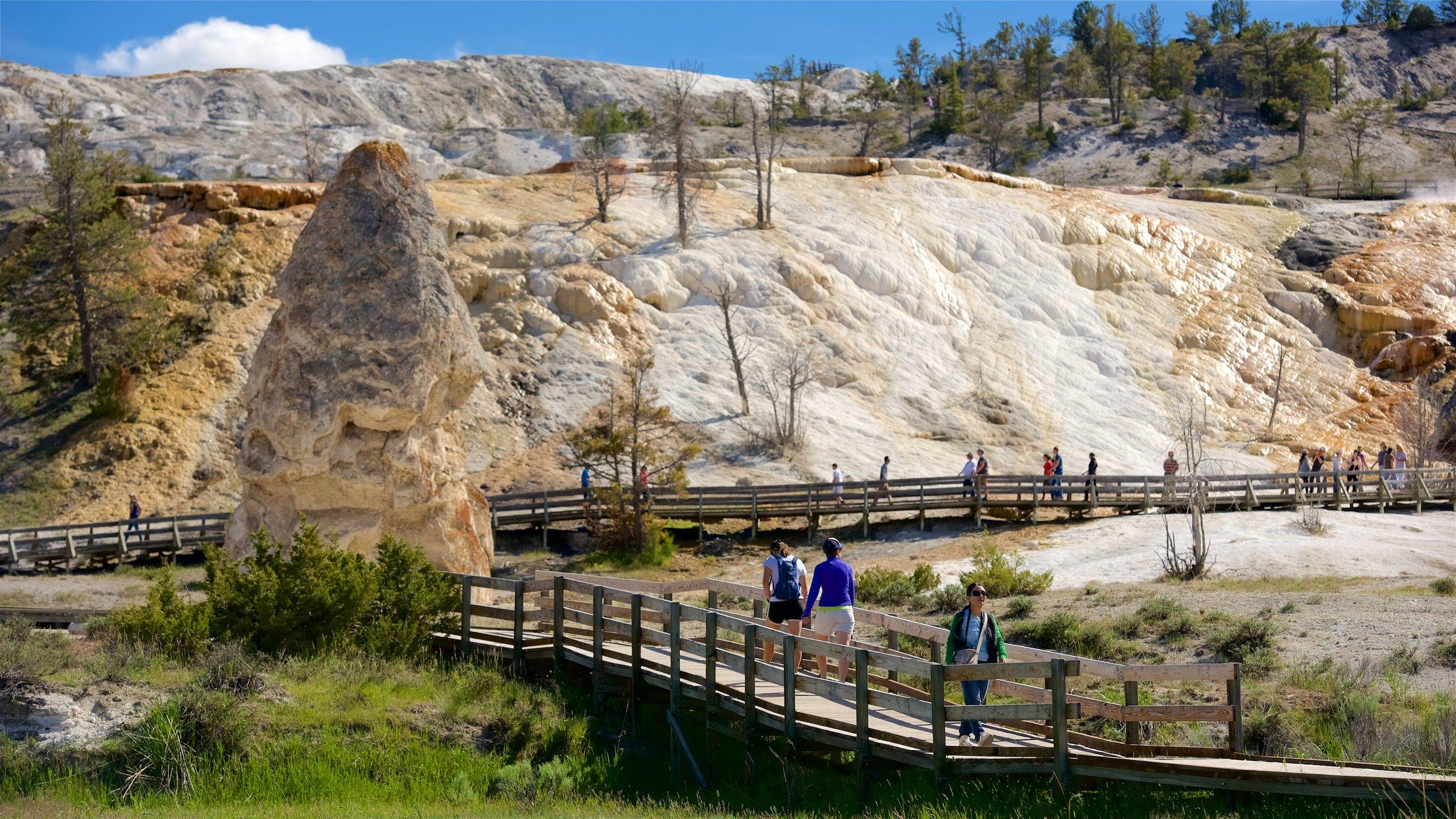 Werden Sie eins mit der Natur und erkunden Sie die reizvolle Umgebung von Mammoth Hot Springs während Ihres Urlaubs in Yellowstone Nationalpark. Spazieren Sie durch die Parks, während Sie in der Gegend sind.