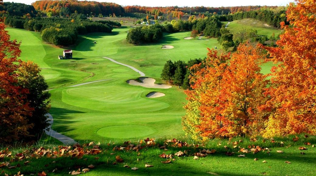 特拉佛斯城 其中包括 秋色 和 高爾夫