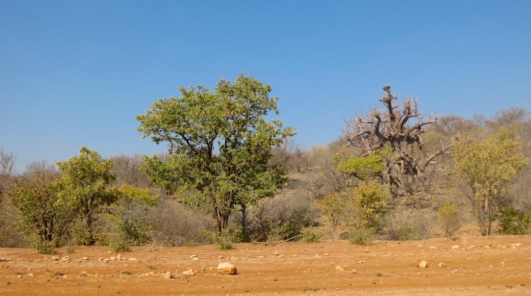 Opuwo montrant vues du désert
