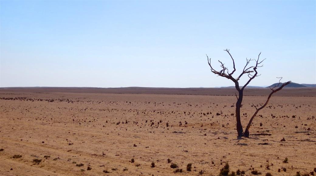 Namibia welches beinhaltet Wüstenblick und ruhige Szenerie