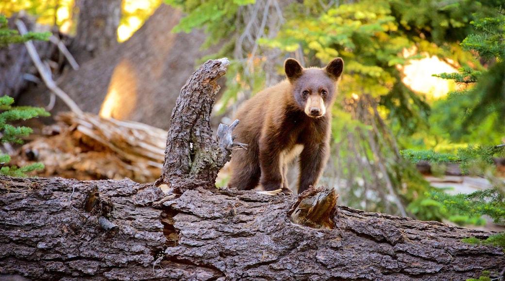 Mill Creek featuring metsät ja vaaralliset eläimet