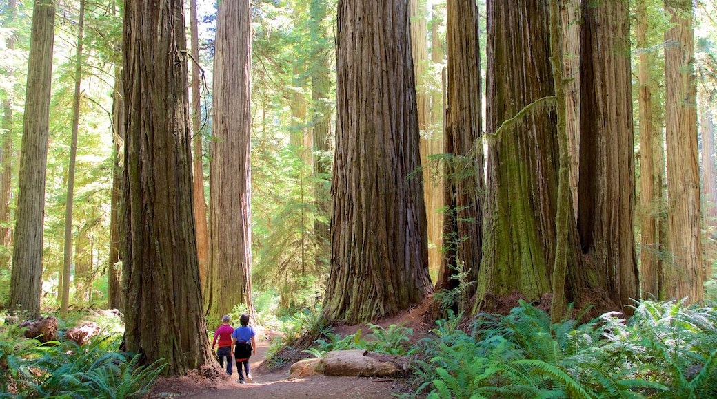 Boy Scout Tree Trail featuring hiking or walking and forests as well as a couple