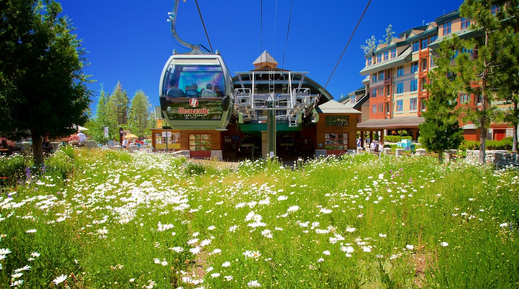 Heavenly Mountain Gondola which includes a hotel, wildflowers and a gondola
