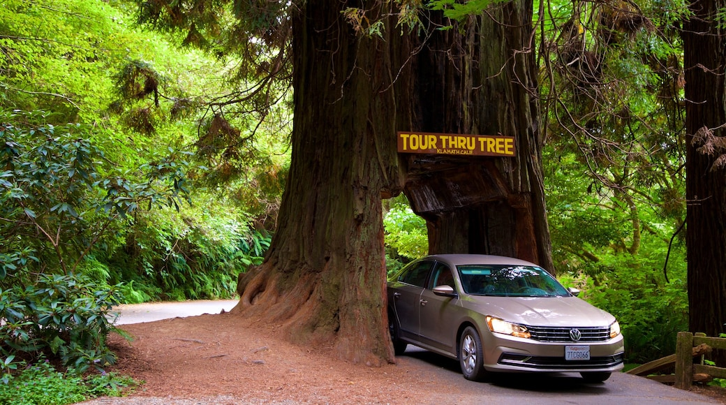 Redwood National and State Parks which includes signage and forest scenes