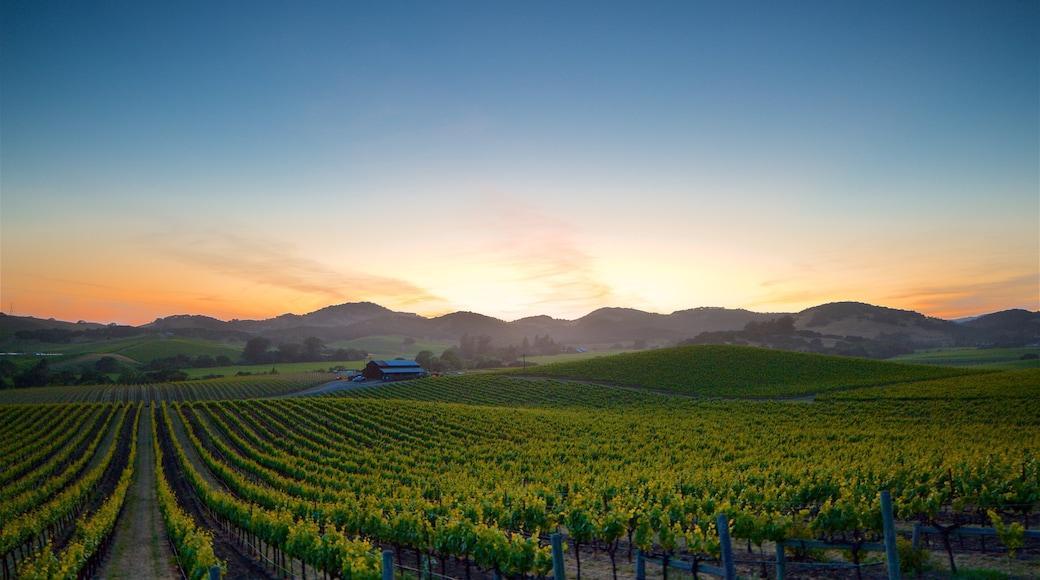 Napa featuring auringonlasku, maisemat ja rauhalliset maisemat
