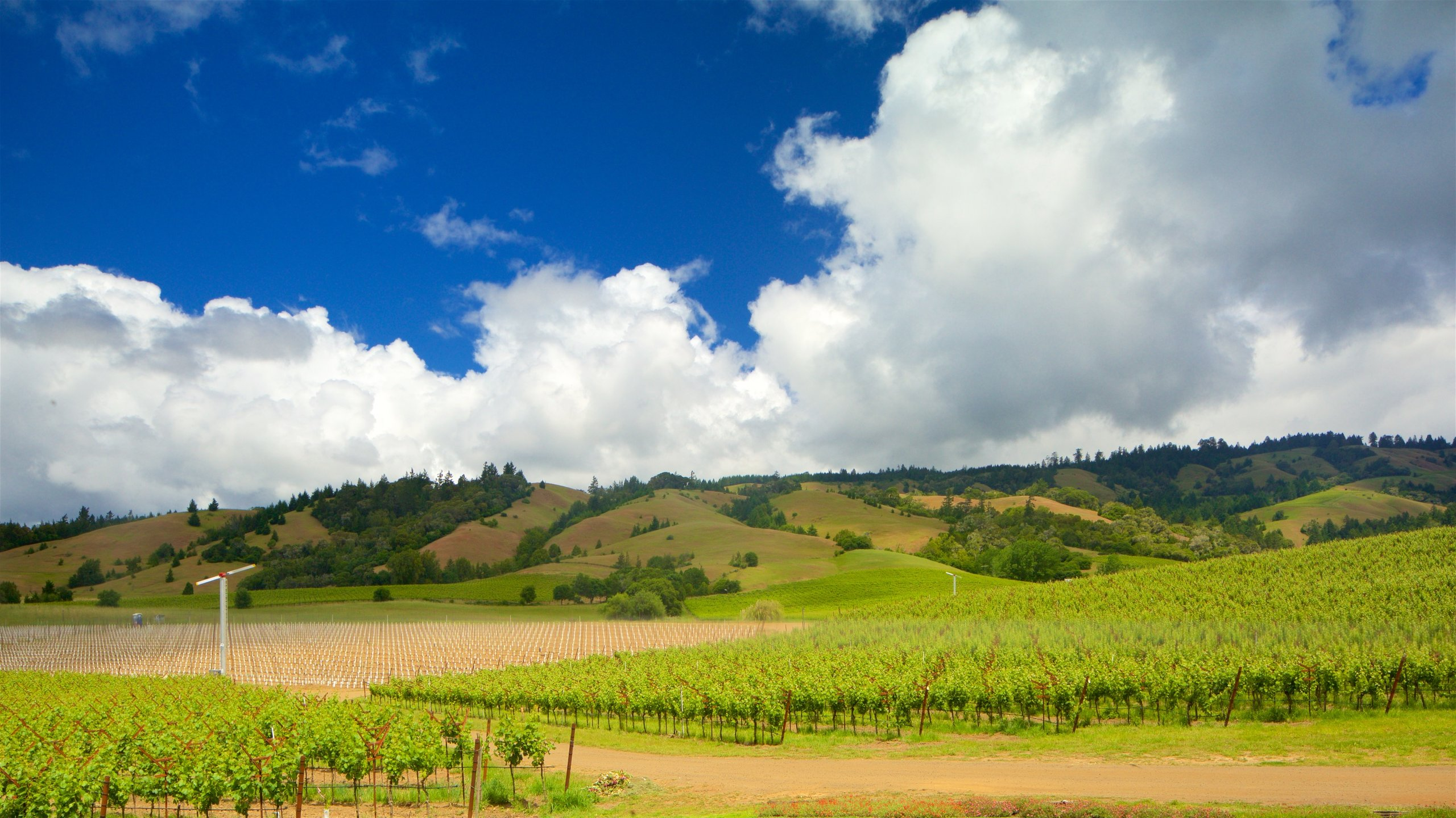Anderson Valley, California, United States of America