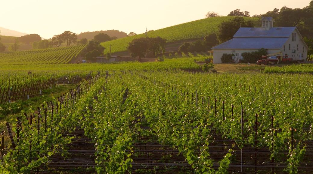 Napa featuring landscape views, farmland and a house