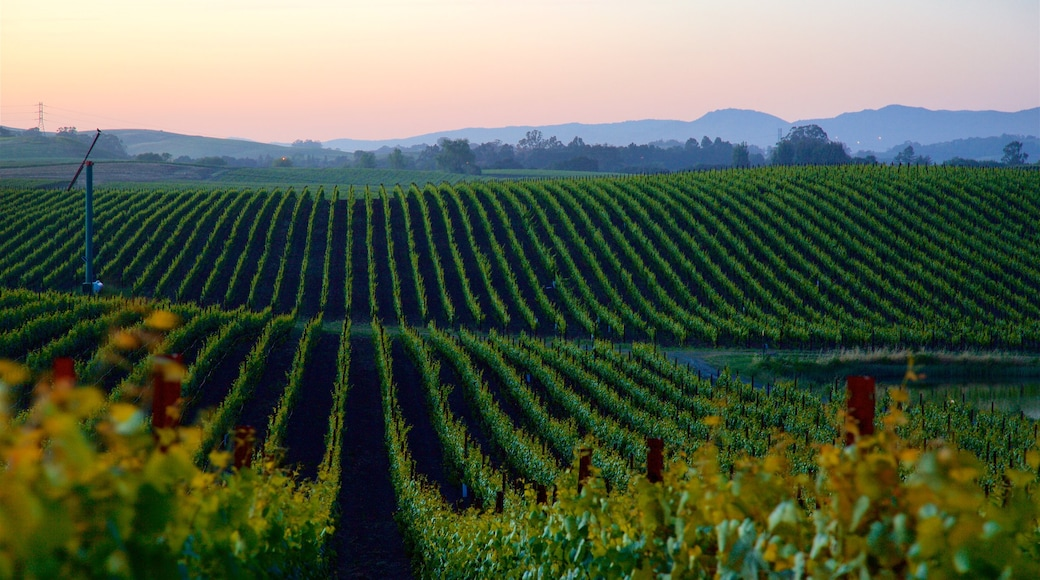 Napa showing tranquil scenes, farmland and a sunset
