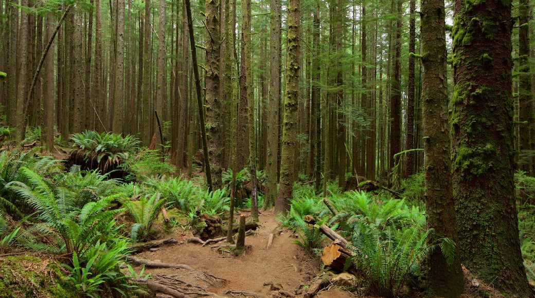 British Columbia featuring forests