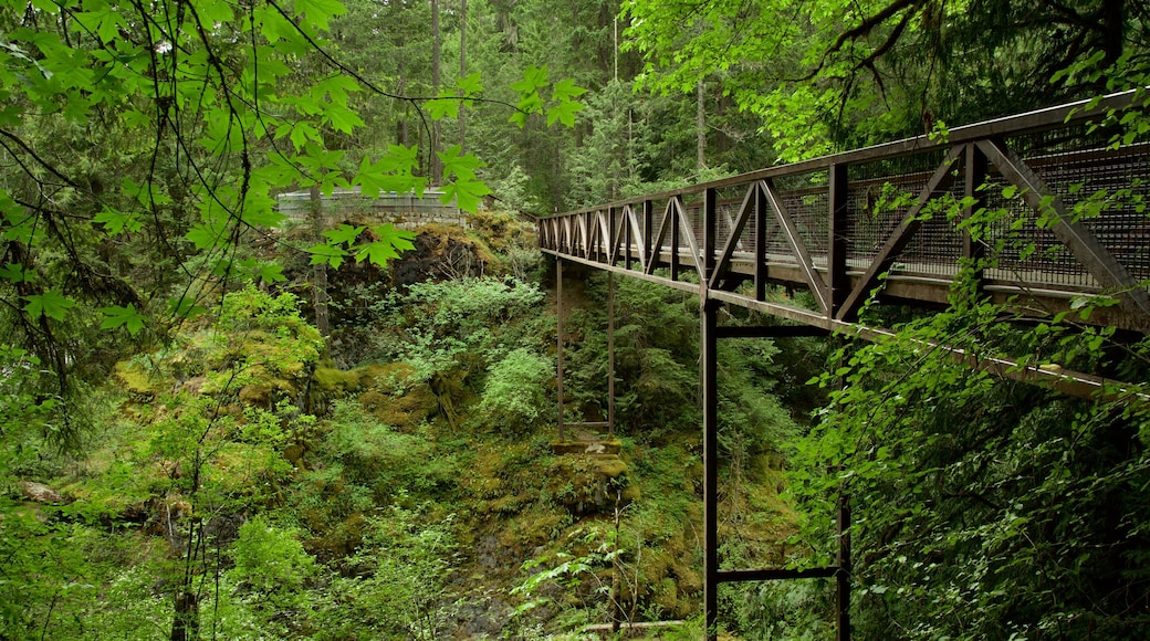 Englishman River Falls Provincial Park showing forests and a bridge