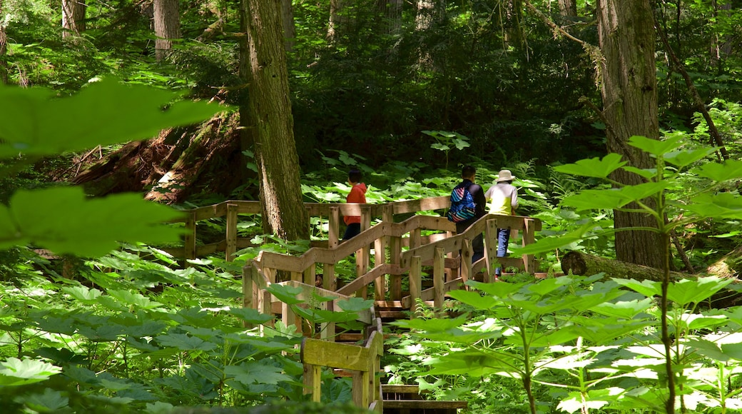 Giant Cedars Boardwalk Trail showing forests as well as a small group of people