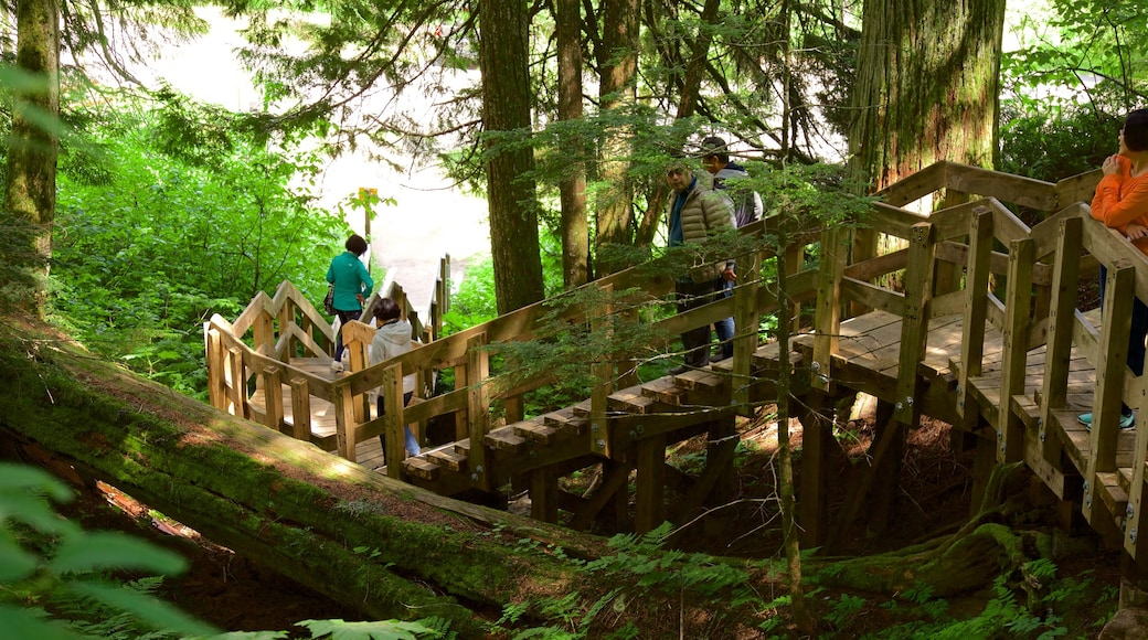 Giant Cedars Boardwalk Trail which includes forest scenes as well as a small group of people