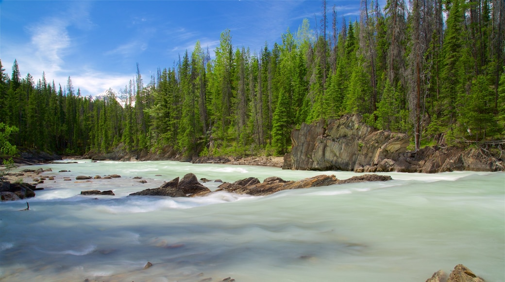 Yoho National Park which includes a river or creek and forests