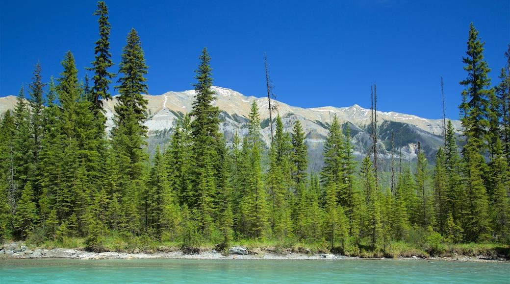 Kootenay National Park mit einem Fluss oder Bach und ruhige Szenerie